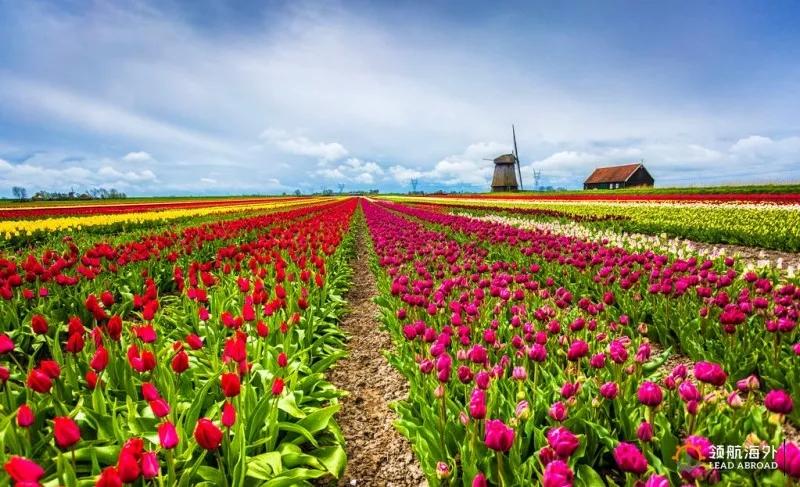 风车、木鞋、奶酪、郁金香号称荷兰四宝,而木鞋又位于四宝之首,其地位可见一斑。木鞋成为荷兰的特产,和光照期短、地势低洼有关。全年晴好天气不足70天,这使荷兰人的爱阳光一如所爱他们的画家梵高笔下的向日葵,也使他们不得不穿上敦实的木鞋对付潮湿的地面,下地干活、庭院劳作乃至室内打扫都穿不同样式的白杨木鞋。后来,精明的荷兰人把木鞋制作发展成一门半机械操作的工艺,木鞋也就成为特色产品和旅游纪念物。